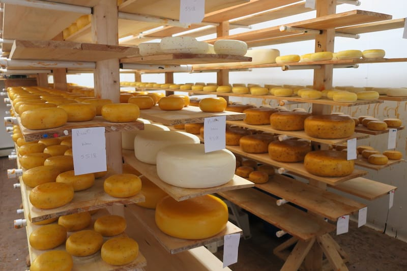 Food Island - Aging Gouda at Glasgow Glen Farms