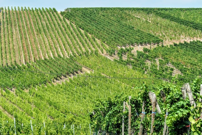 Cremant D'Alsace: Along the wine route in Alsace