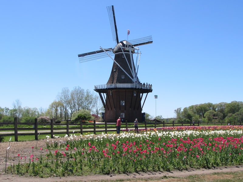 The historic De Zwaan Windmill