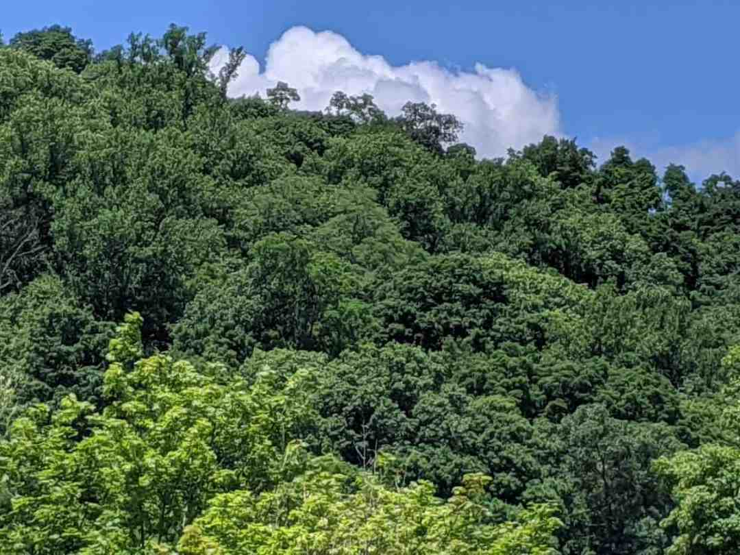 Looking at treetops when a travel writer is not wriiting