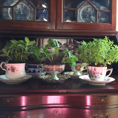 make a Mother's Day teacup herb garden, last minute Mother's Day gift you can make, homemade Mother's Day gift, teacup craft, Goodwill of Orange County