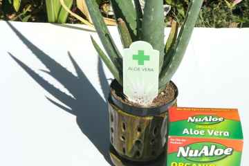 Aloe Vera is Easier to Drink Than Ever