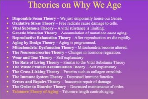 Theorys On Aging
