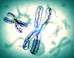 Telomeres are the DNA strands at the ends of our chromosomes.