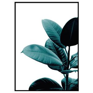 affiche botanic desenio