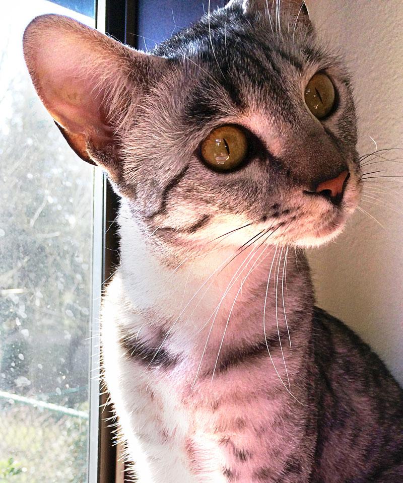 Lola, indignant