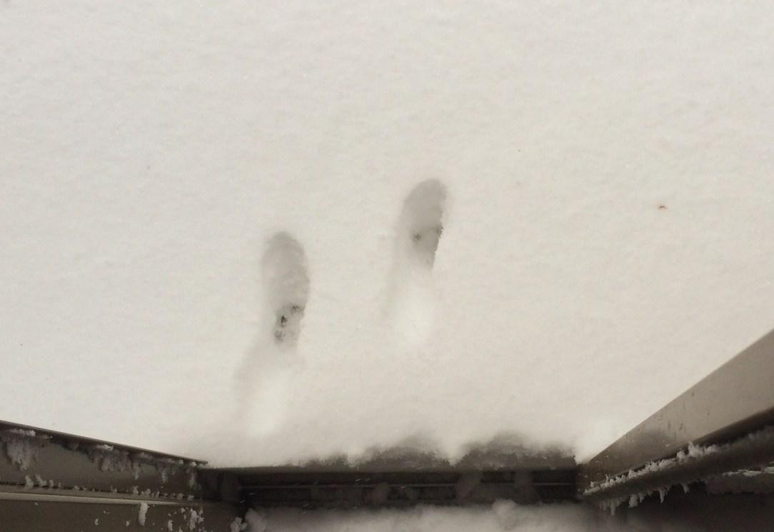 snowedin-nikki-pawholes