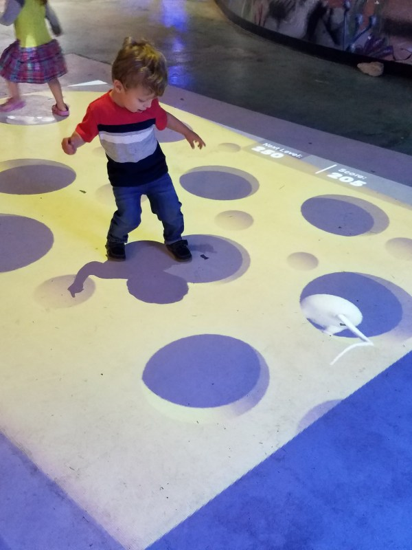 A toddler boy playing on an interactive floor at the Austin Aquarium.