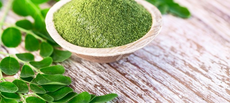 Get To Know Organic Moringa Leaf Powder, A High Nutritious Product From Indonesia