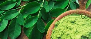 Moringa Leaf Extract Vs Spirulina, Which Is Better