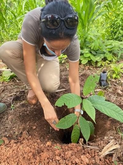Morija plantation