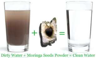 water-treatment-with-moringa-seeds