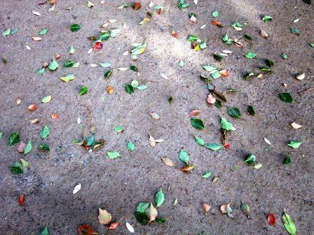下鴨神社 春の落ち葉