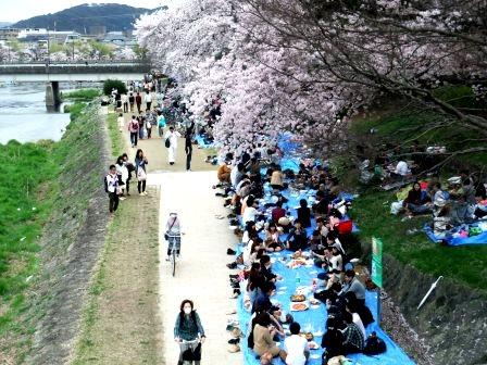 2015年4月お花見@京都出町柳