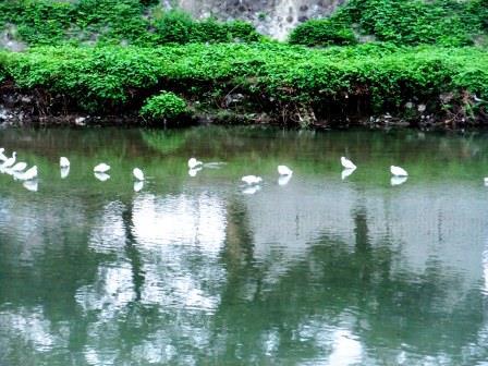 2015年京都高野川