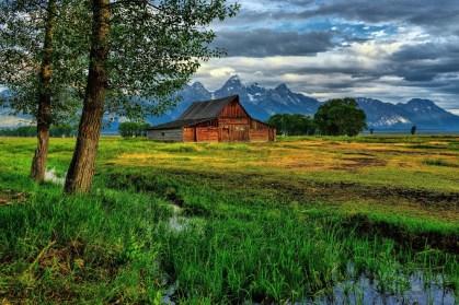 mormon-row-greenery