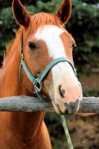 horse-828799-gallery