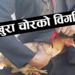 एक किसानको घोषणा : ३५ सयको कुखुरा चोर पत्ता लगाउनेलाई १० हजार इनाम !