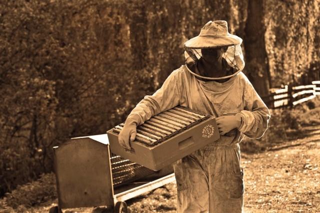 Professione apicoltore: il mercato italiano e le sfide della tecnologia