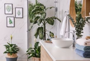The 5 Best Plants for Your Bathroom