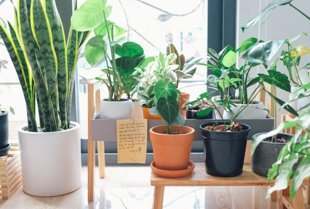 Medicinal Plants to Keep in Your Garden & Home