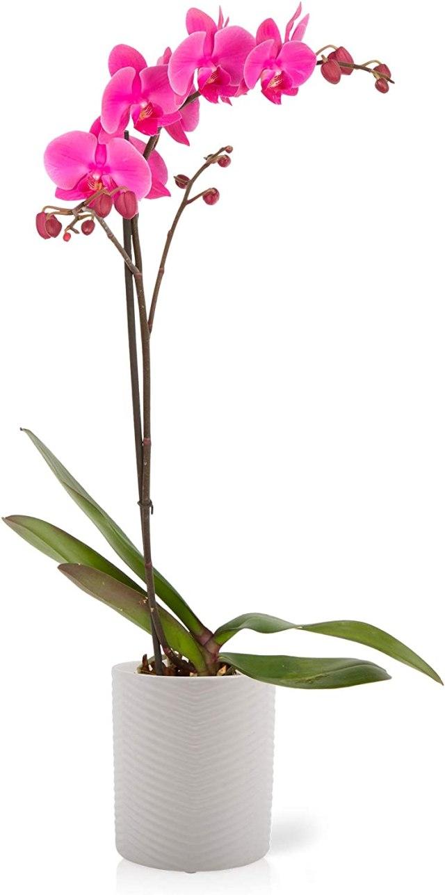 Color Orchids