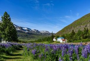 Best Flower Fields