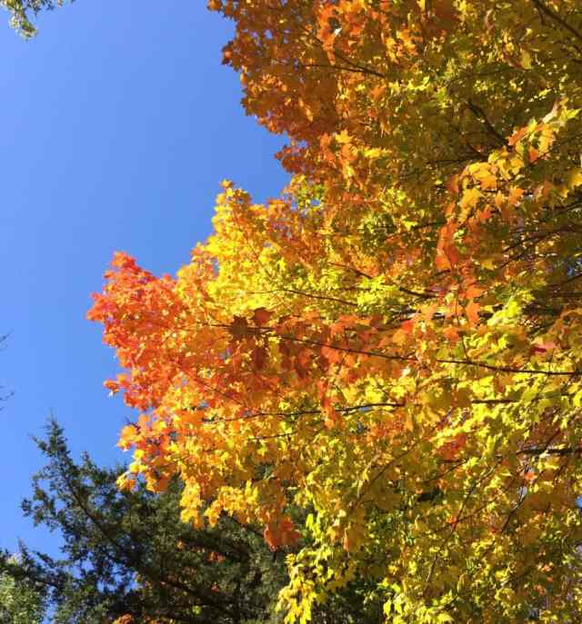 Fall Leaves. I finally decided to enjoy fall!