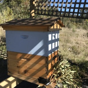 Moving the Bee Hive