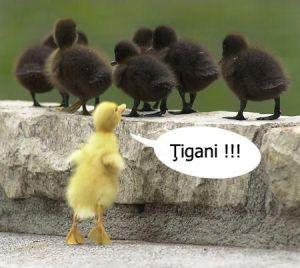 Tigani