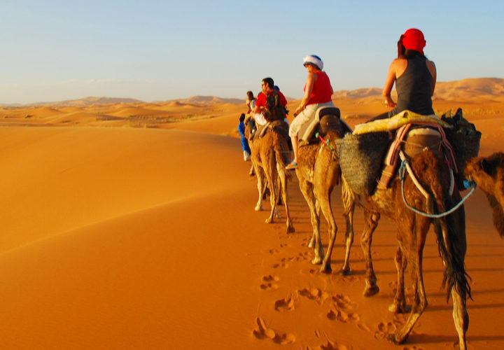 desert camel trekking