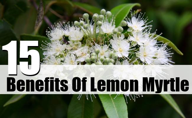 Benefits Of Lemon Myrtle