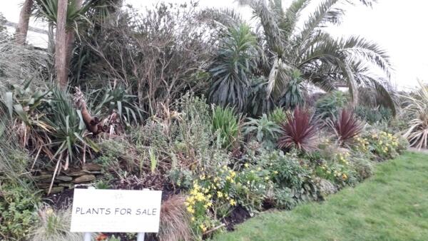 Plants for sale at Bleujyowa – Curious Plants
