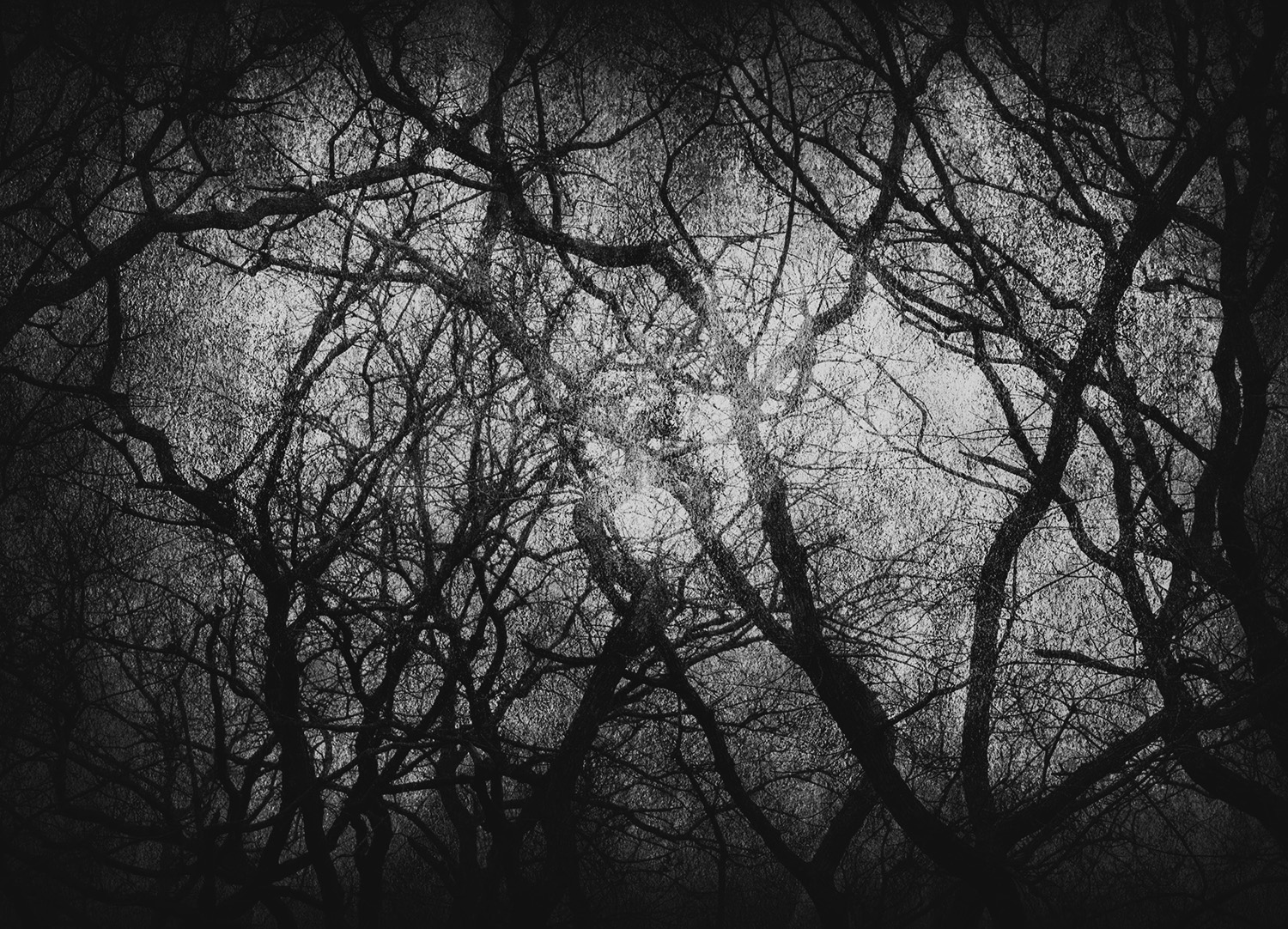 wg_tree_scape_textures10_bw