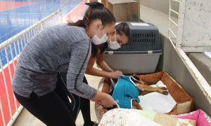 52 animais castrados em mutirão realizado pela ONG Vida de Cão