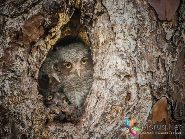 Masters of Disguise, The Next Generation - 2013-11-02_227780_nature.jpg