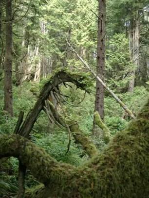3_rainforest