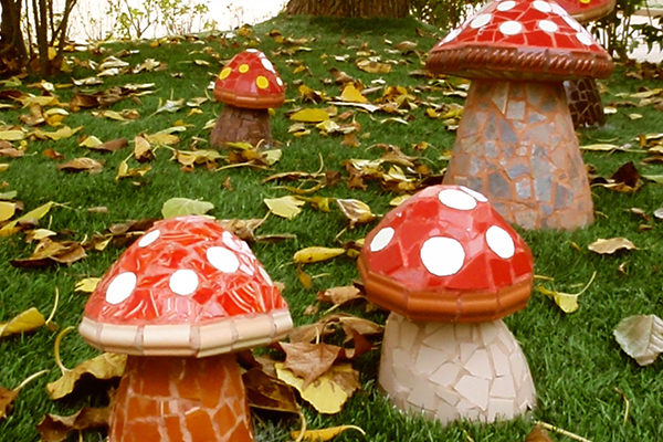 Mushrooms in the garden.