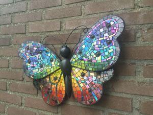 Regenboogvlinder groot