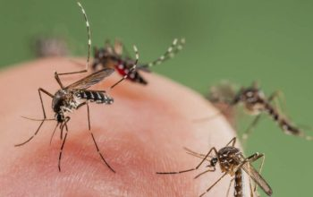 Summer Season brings Mosquito Madness.