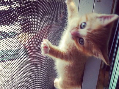 Image result for cat pawing at screen door