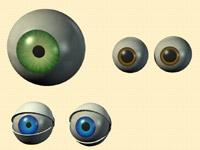 3D eyeball models