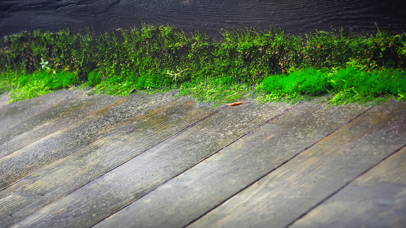 https www mossout com killing moss tips how to kill and prevent sidewalk and patio moss