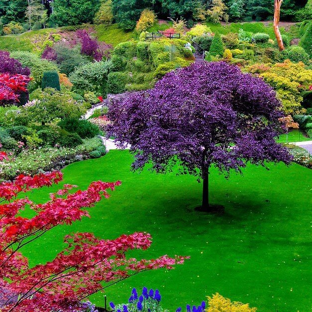 beautiful gardens 17