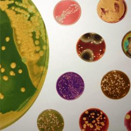 #MicrobeWeek: Celebrating the Small