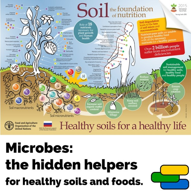 "Modified FAO ""Soil the foundation of nutrition"" poster to include the hidden half of nature making it all work - microbes!"