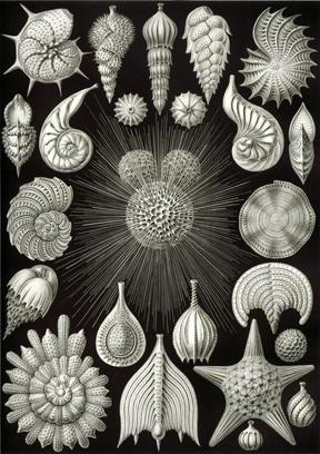 microscopic_world