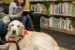 Dog Therapy Helps Kids Read