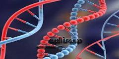كيفية تحليل الجينات