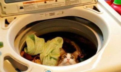 Picture of cat in washing machine